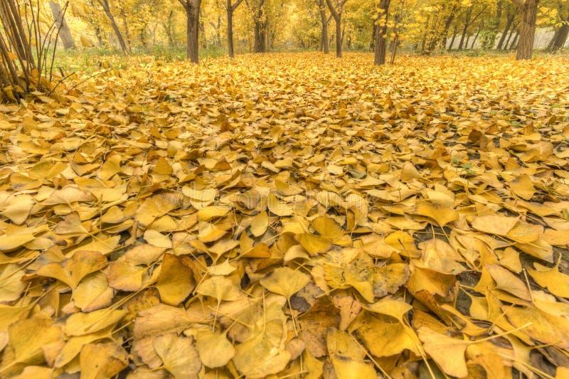 Amarelo dourado fotografia de stock