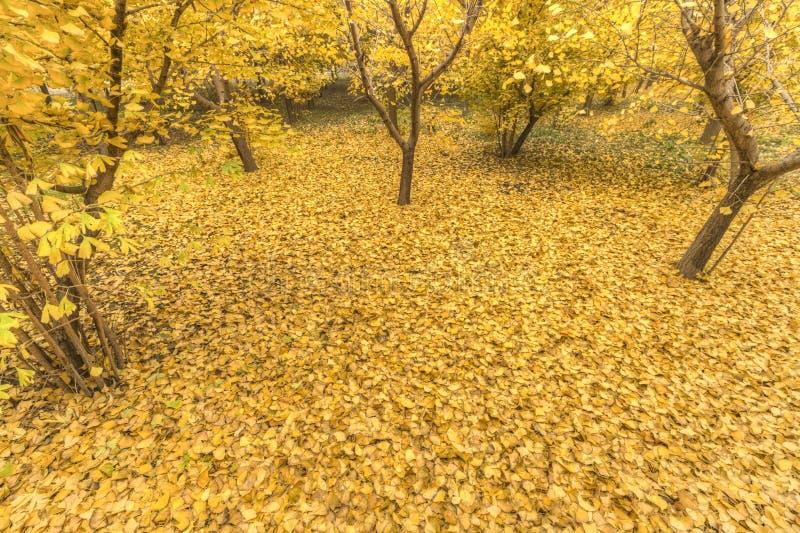 Amarelo dourado imagem de stock
