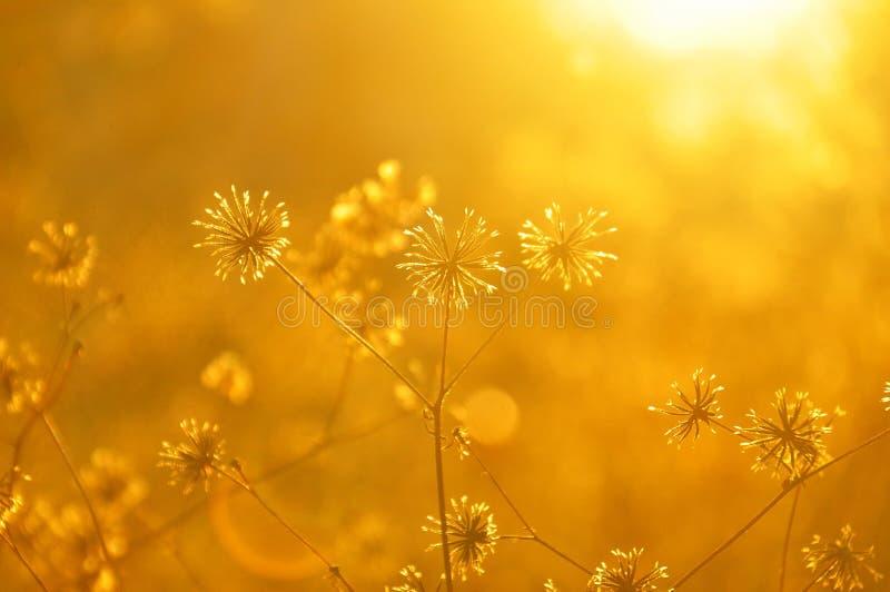 Amarelo, flora, luz solar, manhã