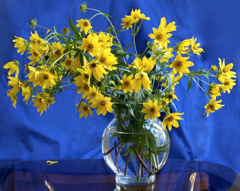 Amarelo no azul foto de stock royalty free