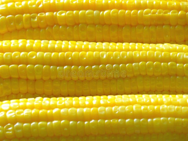 Amarelo vívido Sugar Corns fervido alinhado para o fundo, a textura e a bandeira fotos de stock