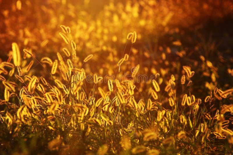 Amarelo, vegetação, grama, campo
