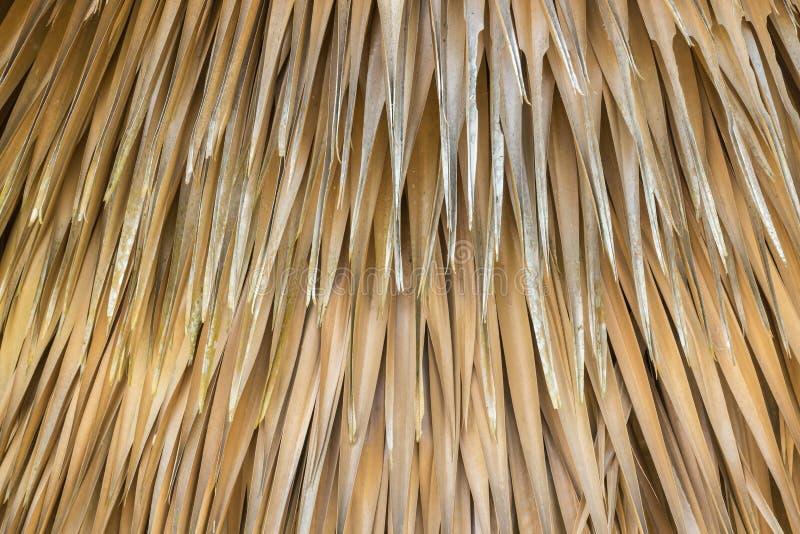 Amarelos abstratos secam da textura em folha de palmeira da árvore e imagem de stock royalty free