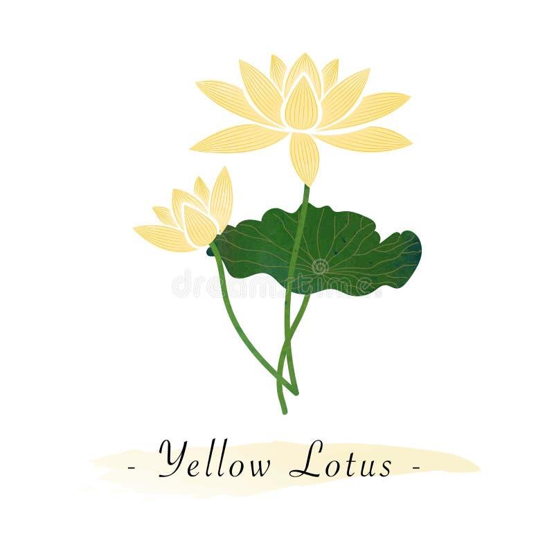 Amarillo colorido de la flor del jardín botánico del vector de la textura de la acuarela ilustración del vector