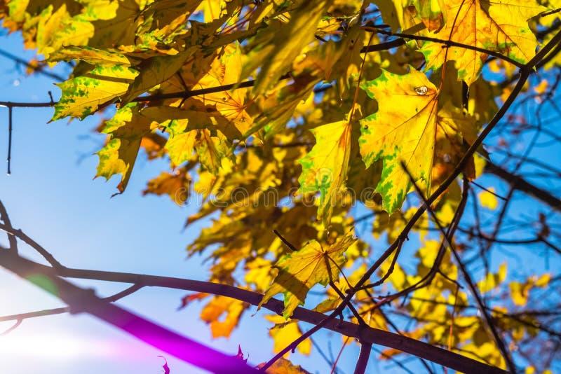 Amarillo de las hojas de oto?o fotos de archivo
