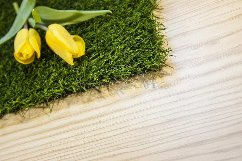 Amarillo de los tulipanes imagenes de archivo