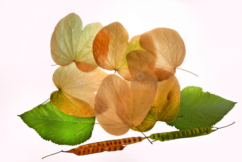 Amarillo del verde de las hojas de otoño nostalgy imagenes de archivo