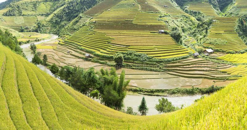 Amarillo, póngase verde, viaje, naturaleza, paisaje, asiático, pertenencia étnica, rural, campo, planta, país, valle, montaña, ec foto de archivo libre de regalías
