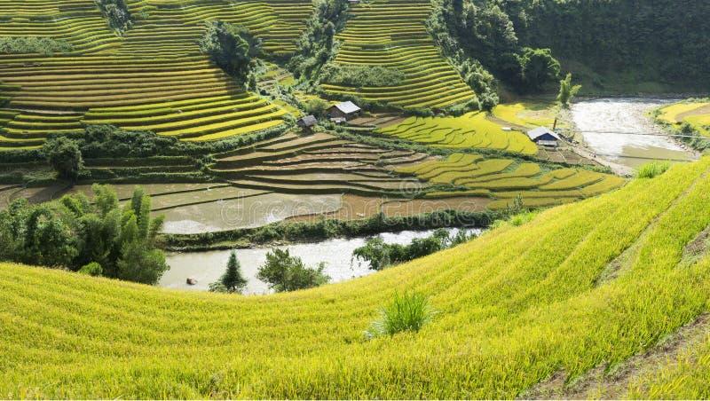 Amarillo, póngase verde, viaje, naturaleza, paisaje, asiático, pertenencia étnica, rural, campo, planta, país, valle, montaña, ec foto de archivo