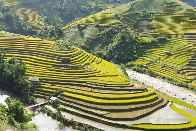 Amarillo, póngase verde, viaje, naturaleza, paisaje, asiático, pertenencia étnica, rural, campo, planta, país, valle, montaña, ec imagen de archivo