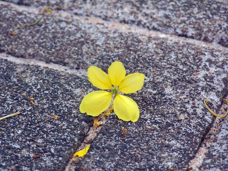 Amarillo solitario imagenes de archivo