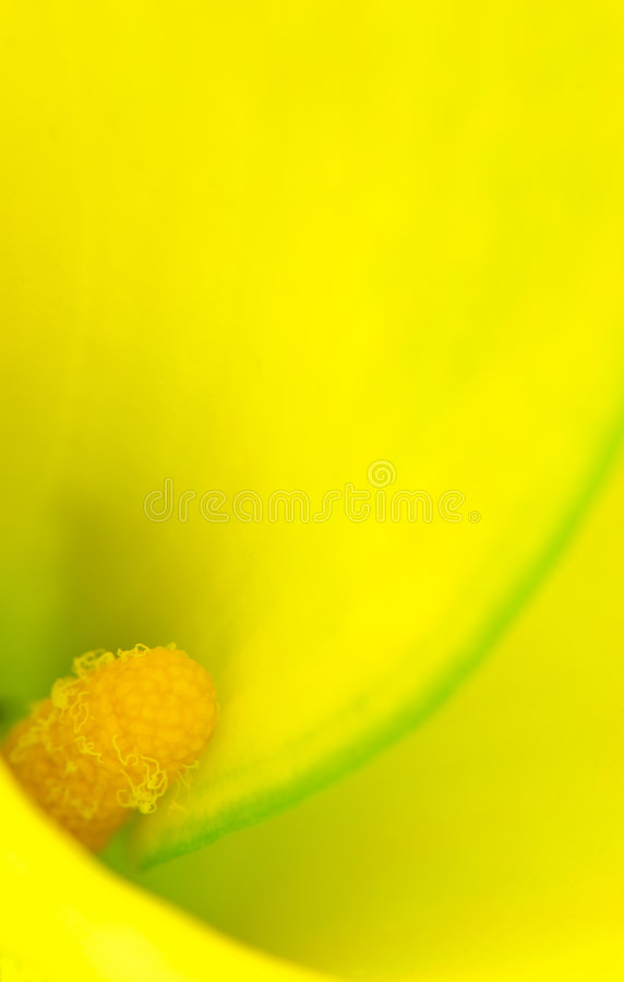 Amarillo suave imagenes de archivo