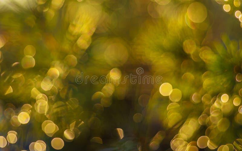 Amarillo y verde fotografía de archivo