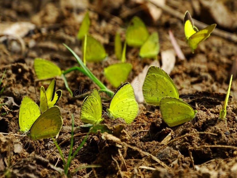 Amarillos de la hierba fotos de archivo