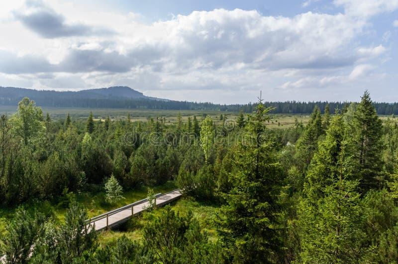 Amarrez le parc national de voie de promenade de forêt de pin de marais photo stock