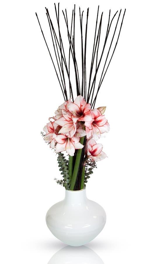 amarylek kwitnie lelui wazę obraz royalty free