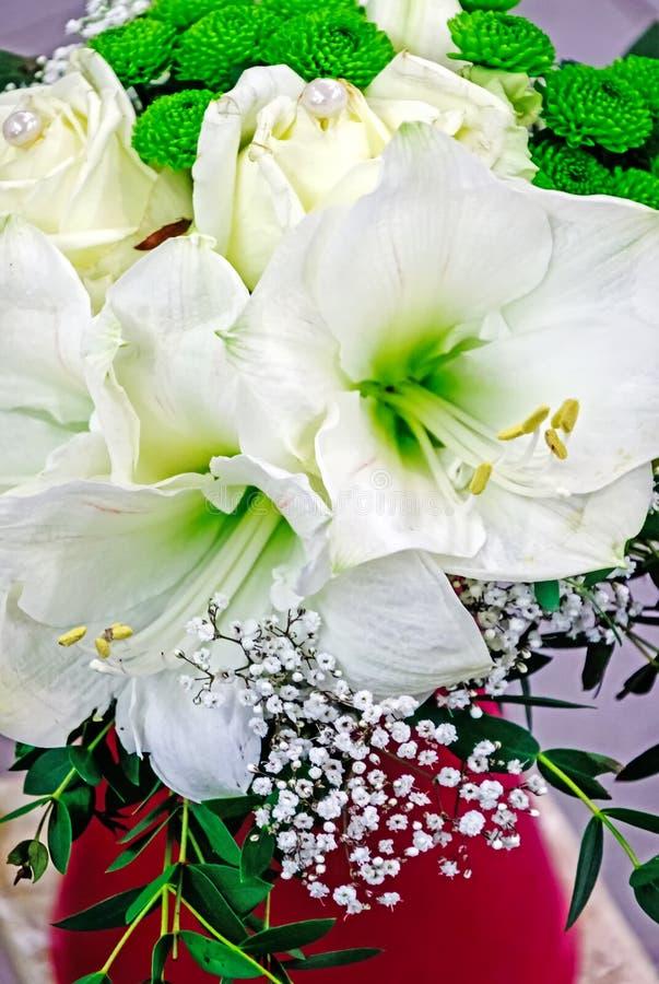 Amaryllis blanca en un florero rojo fotos de archivo libres de regalías