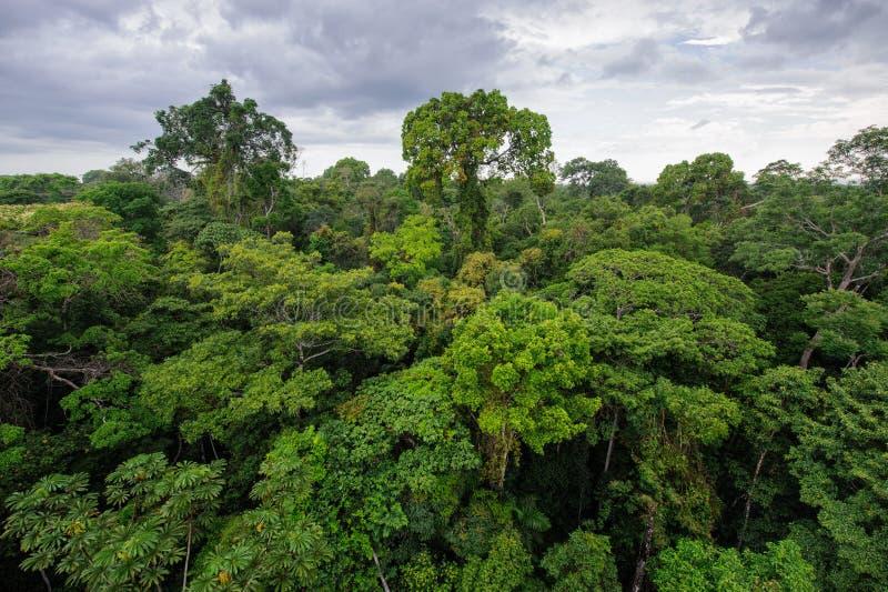 Amasonrainforest royaltyfri bild