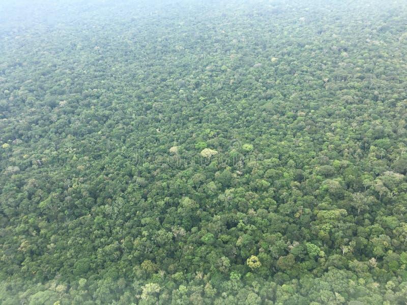 Amasonrainforest royaltyfria foton