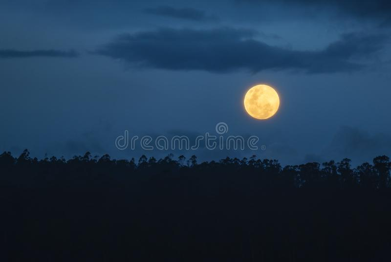 AmasonRainforestfullmåne, Ecuador arkivfoto