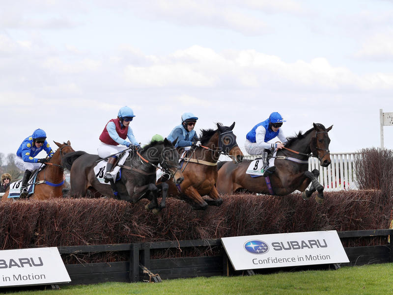 Amateur steeplechase races