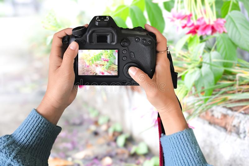 Amateur photographers use the camera to look at street flowers. royalty free stock images