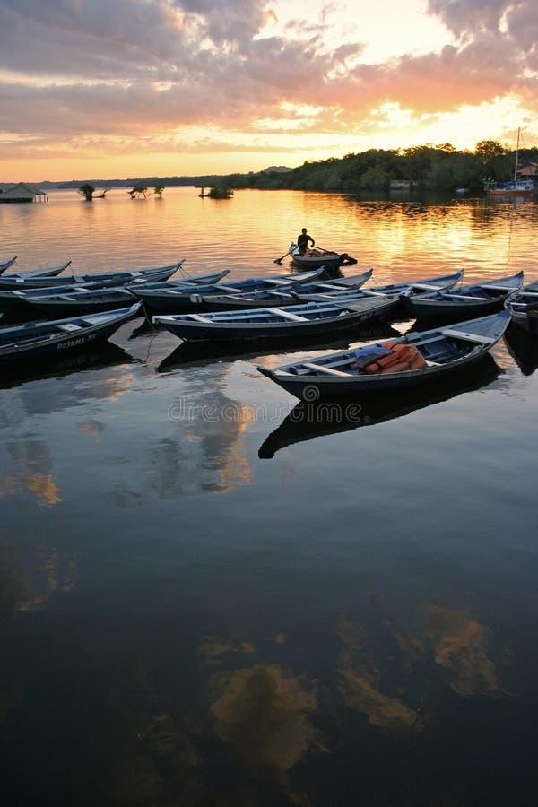 Amazónia Brasil fotografia de stock