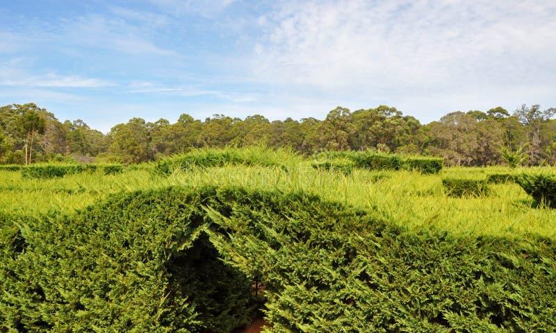 Amaze'n Margaret River: Förbise häcklabyrint royaltyfria foton