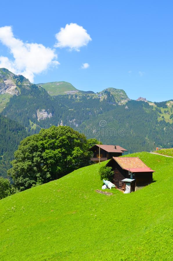 Amazing Alpine landscape above Lauterbrunnen in Switzerland captured in the summer season. Green meadows, typical wooden chalets. royalty free stock photography