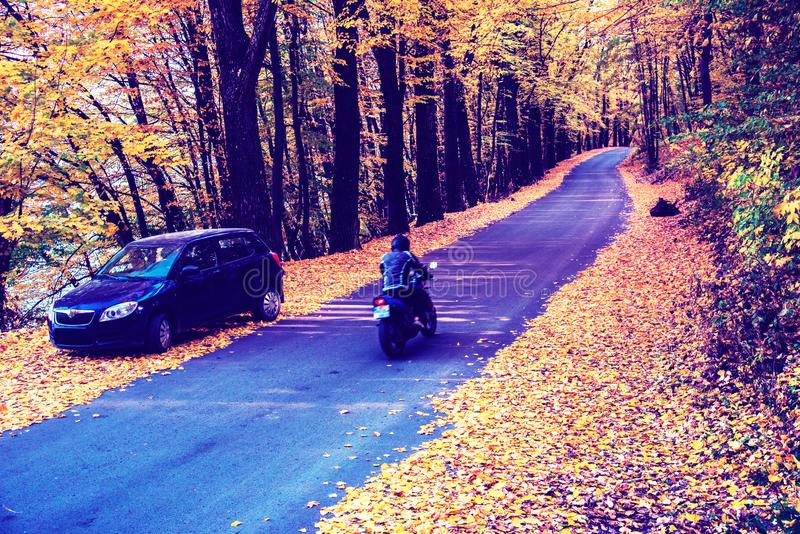 Amazing autumn landscape with car and man on bike and yellow leaves along road in cosy forest.  royalty free stock photography