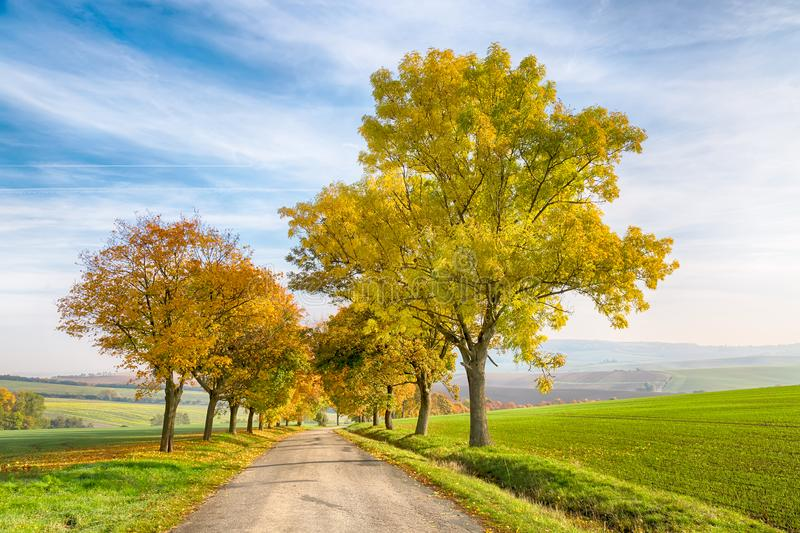 Amazing autumn landscape of country road with colorful trees and blue sky with green grass in South Moravia region, Czech Republic.  stock photos