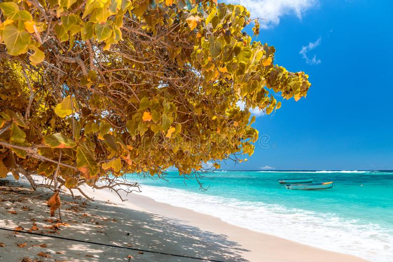 Amazing beach and vegetation in Seychelles. Autumn colors.  royalty free stock image