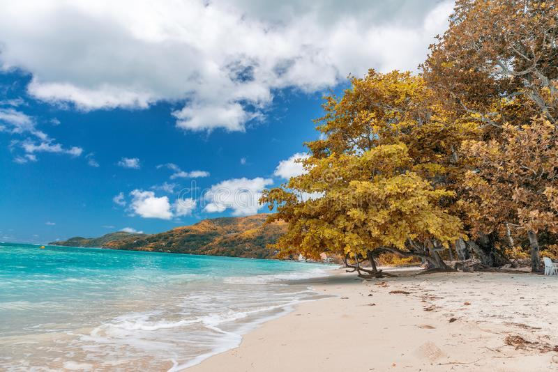 Amazing beach and vegetation in Seychelles. Autumn colors.  royalty free stock photos