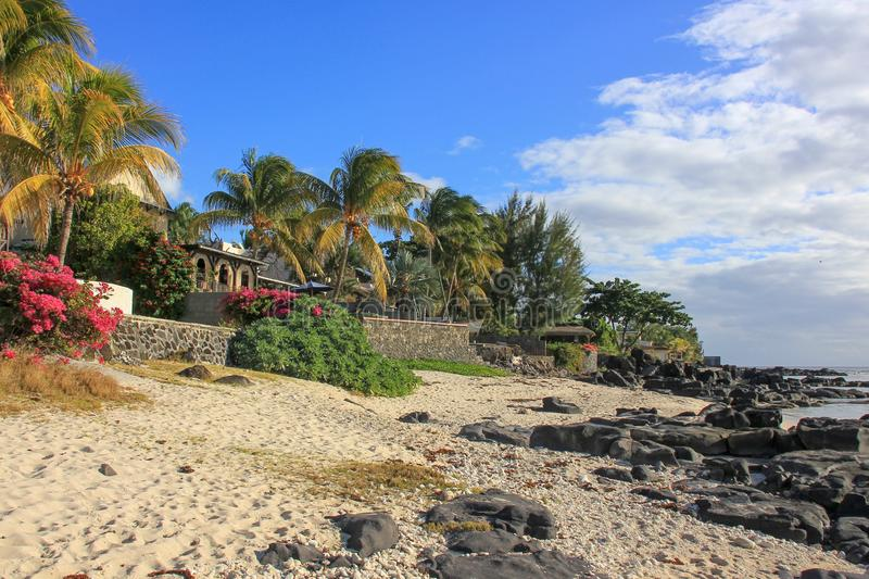Scenic view to coastline sandy beach with black stones and blossom bushes and palm trees in village of tropical island Mauritius royalty free stock images