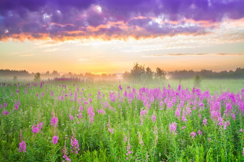 Amazing beautiful rural landscape with sunrise  and  blossoming meadow royalty free stock photo