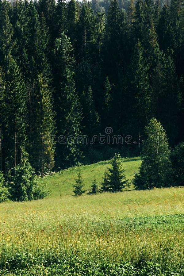 Amazing beautiful view of hills with woods and cloudy sky in sum. Mer mountain royalty free stock photo