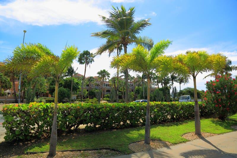 View of a street of Aruba Island. Green plants on blue sky background. stock photo
