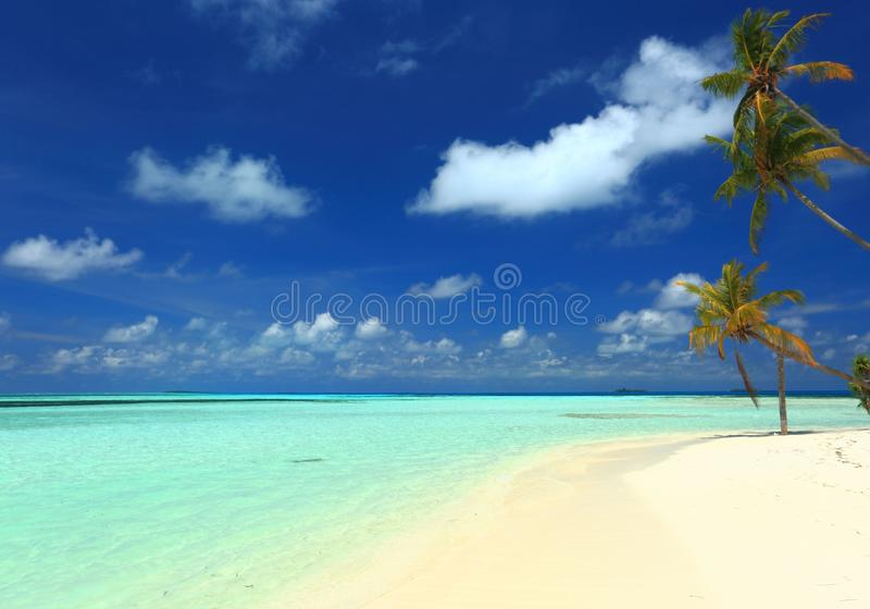 Amazing beauty view of tropical landscape. White sand beach with palm trees, turquoise water on blue sky with gorgeous white cloud. S background. Indian Ocean royalty free stock image