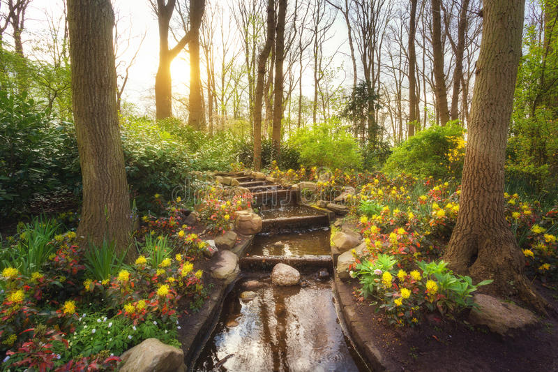 Amazing blooming spring park with water cascade. In famous Keukenhof park, Netherlands. Beautiful landscape with colorful flowers, trees with green leaves royalty free stock image