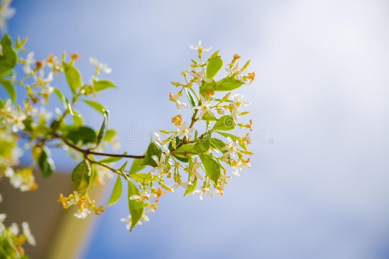Amazing blur sky with a nice white flower and a green leaf. Found in ibiza in focus royalty free stock images