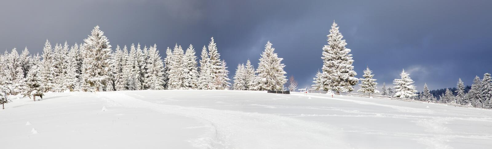 amazing Christmas background with snowy firs winter landscape royalty free stock photo
