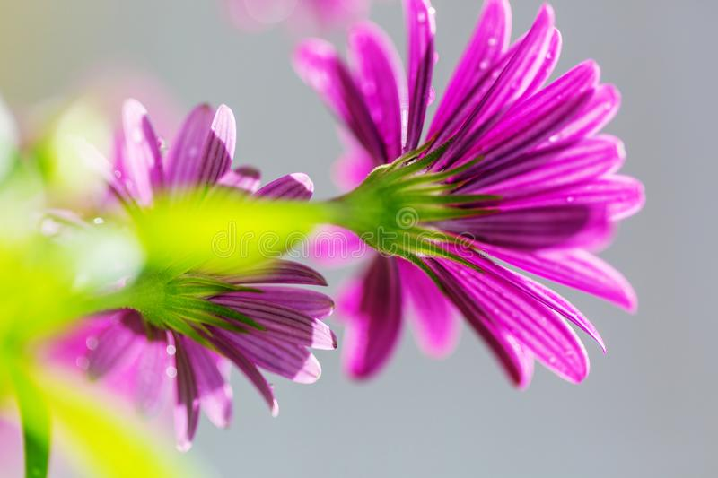Flower. Amazing colorful flower royalty free stock images