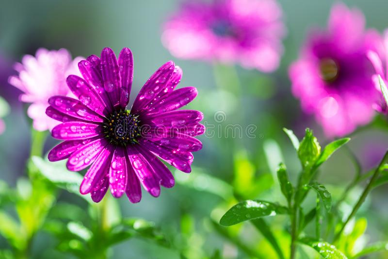 Flower. Amazing colorful flower royalty free stock image