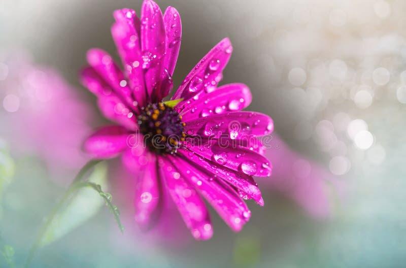 Download Flower stock photo. Image of grass, flower, nectar, magenta - 109450354