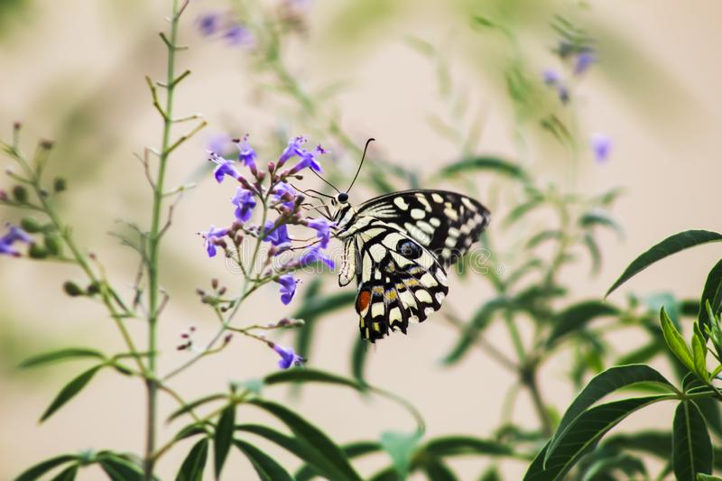 Amazing colors of butterfly stock photography