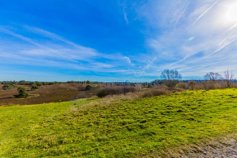 Amazing contrast on a sunny day of a green grass with an arid terrain with a wonderful blue sky. And white clouds in Brunssummerheide in South Limburg in the royalty free stock images