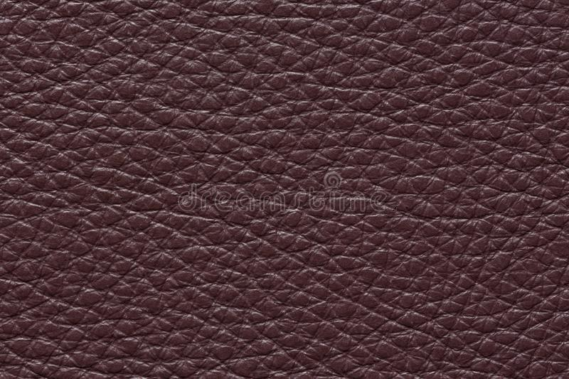 bc755c7447207 Texture. Amazing dark violet leather background. High resolution photo  royalty free stock image