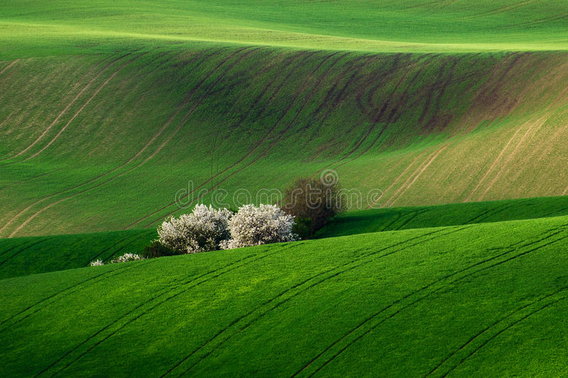 Amazing detail scenery at South Moravian field, Czech republic. royalty free stock image