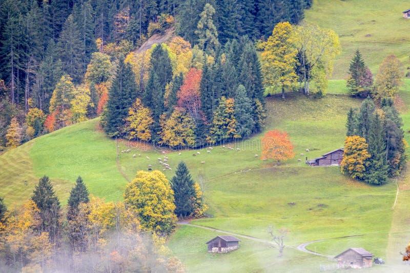 Amazing dream like Swiss alpine mountain landscape. Wooden chalets on green fields in Grindelwald of Switzerland stock photography