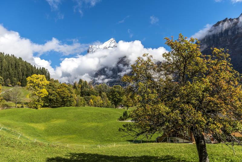 Amazing dream like Swiss alpine mountain landscape. Wooden chalets on green fields and high mountains with snowy peaks background, in Grindelwald of royalty free stock image